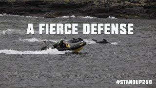 A Fierce Defense