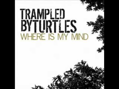 Trampled By Turtles Where Is My Mind Pixies Cover Chords Chordify