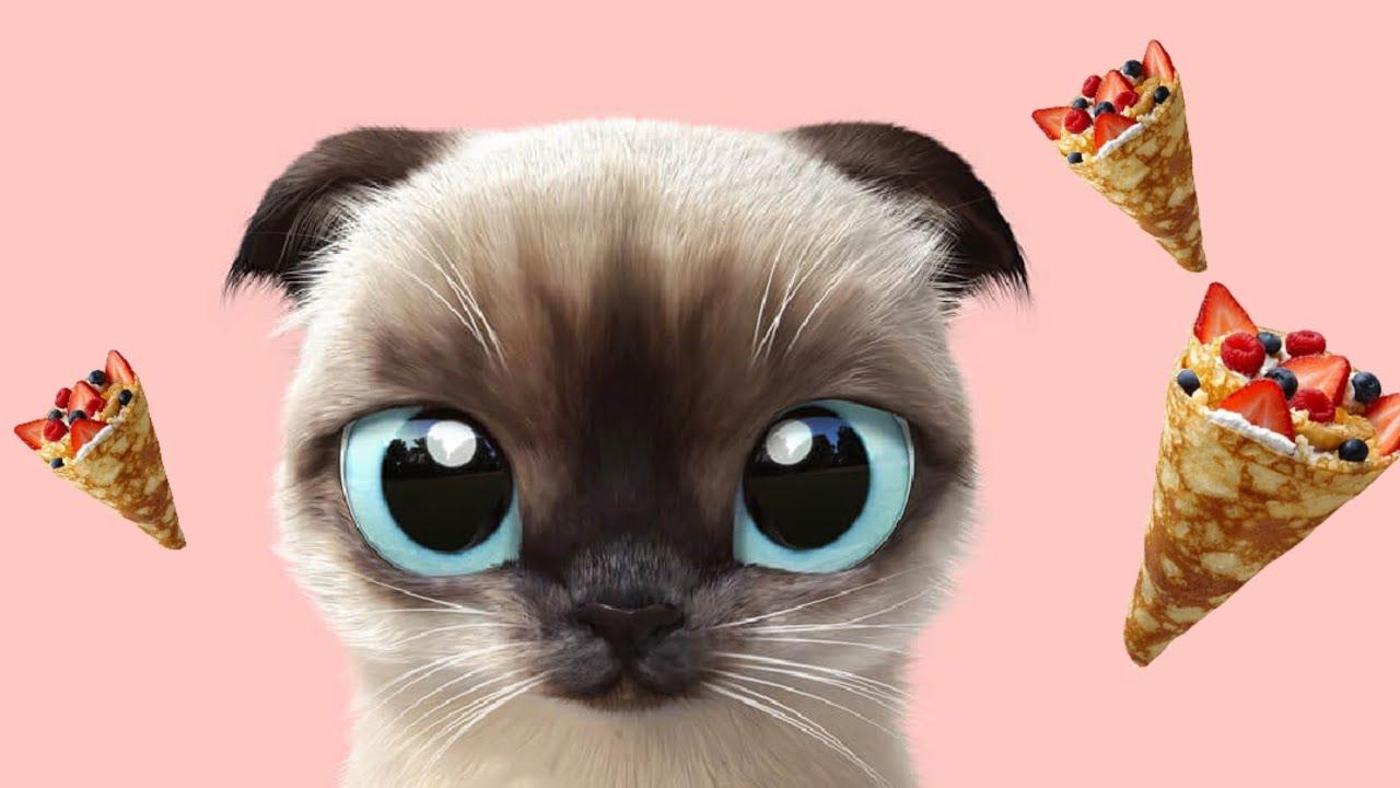 НЕОБЫЧНАЯ ЛЮБОВЬ Кошки и Собаки-#СмешныеКоты #СмешныеКошки ...