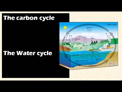 Environment and ecology: Carbon cycle and Water cycle  : Learn Online