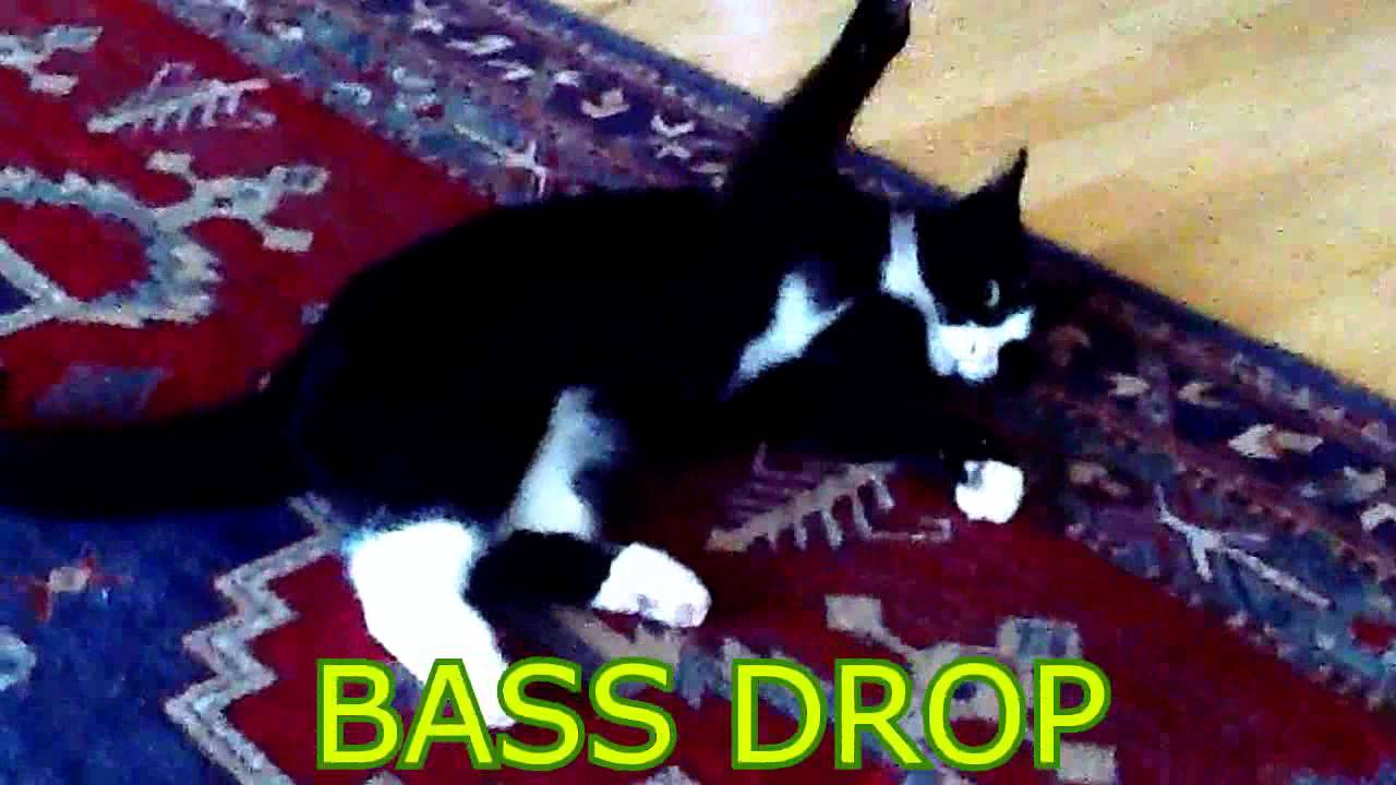 Drop The Bass Cat Youtube