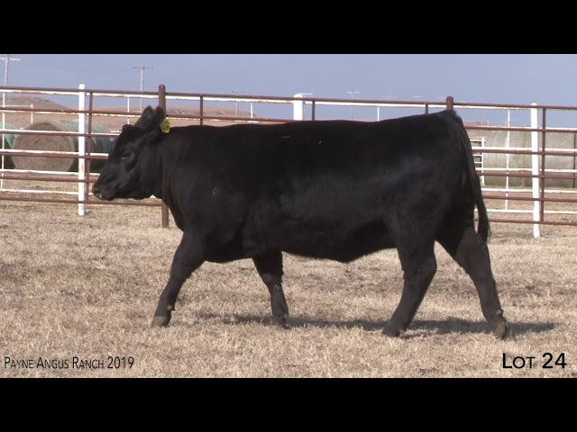 Payne Angus Ranch Lot 24