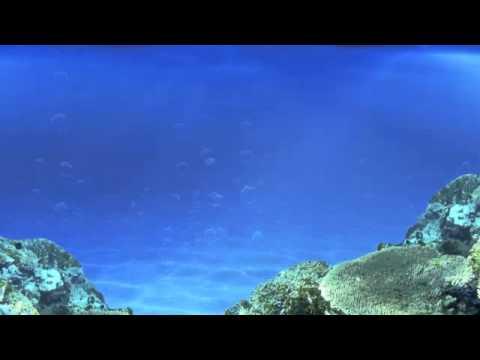 Video fondo agua youtube for Fondos animados de agua