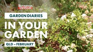 Gardening in February | Queensland | Bunnings Garden Diary