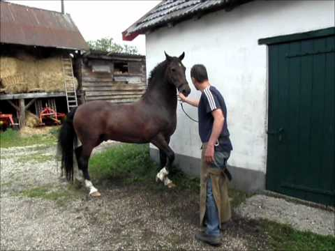 how to train a scared horse