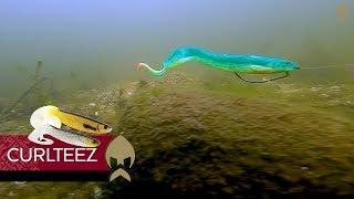 CurlTeez - Westin-Fishing