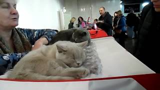 Коты и кошечки в Украинском доме