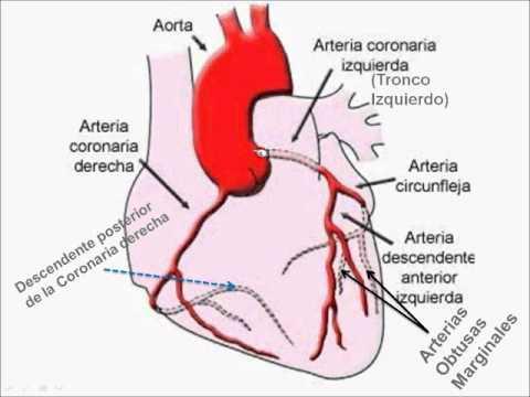 Electrocardiograma 1 Anatomía Esquemática de las Arterias Coronarias ...