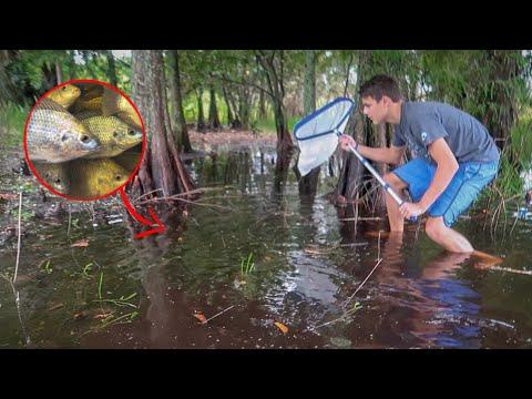 SAVING FISH In RAIN STORM PUDDLE!!!