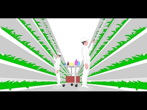 How Vertical Farming can solve the world's food crisis and save the environment.
