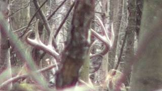 Flintlock Muzzleloader Deer Hunting 2011 Big Buck Pennsylvania #2