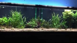 125 gallon freshwater setup