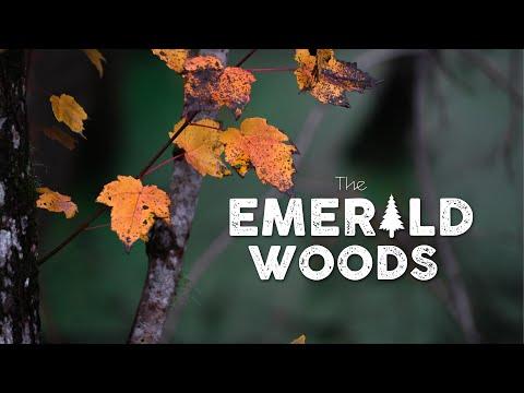 THE EMERALD WOODS / EMERALD ISLE, NC