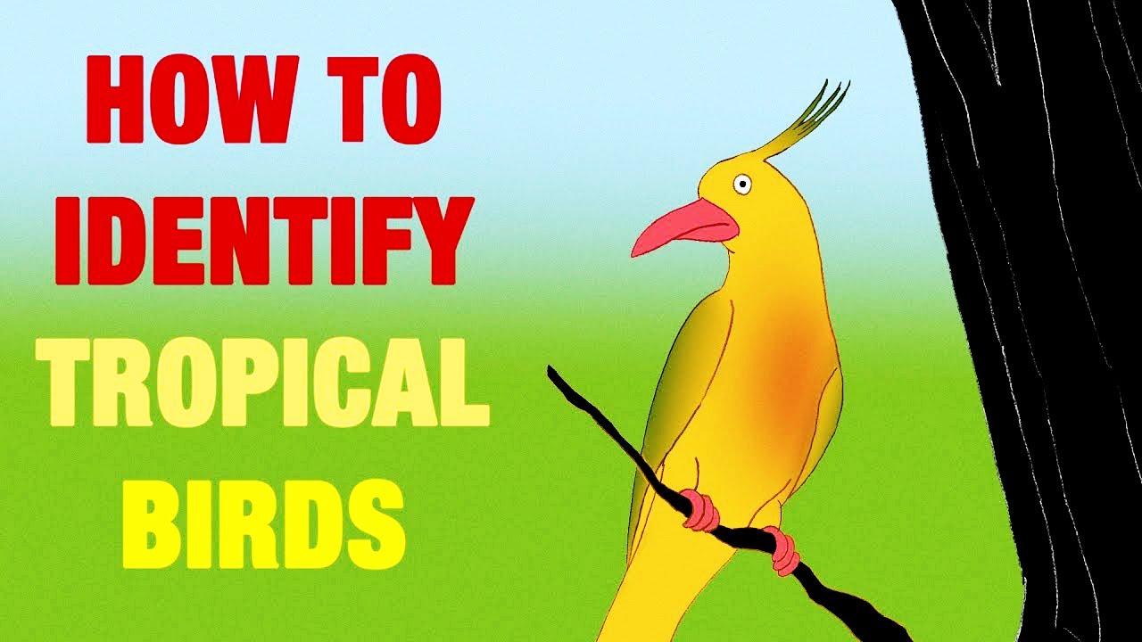 how to identify tropical birds youtube