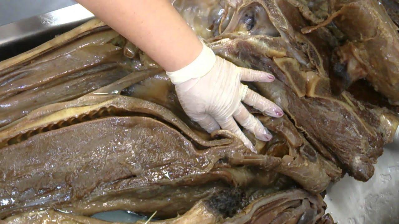 Estudo corpo humano anatomia