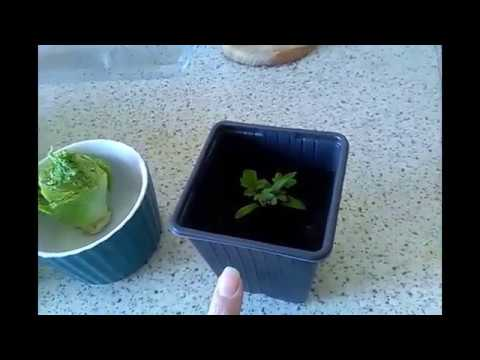 Grow Your Own Mushrooms & Other Vegetables