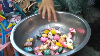 Hermit crabs with colored shells