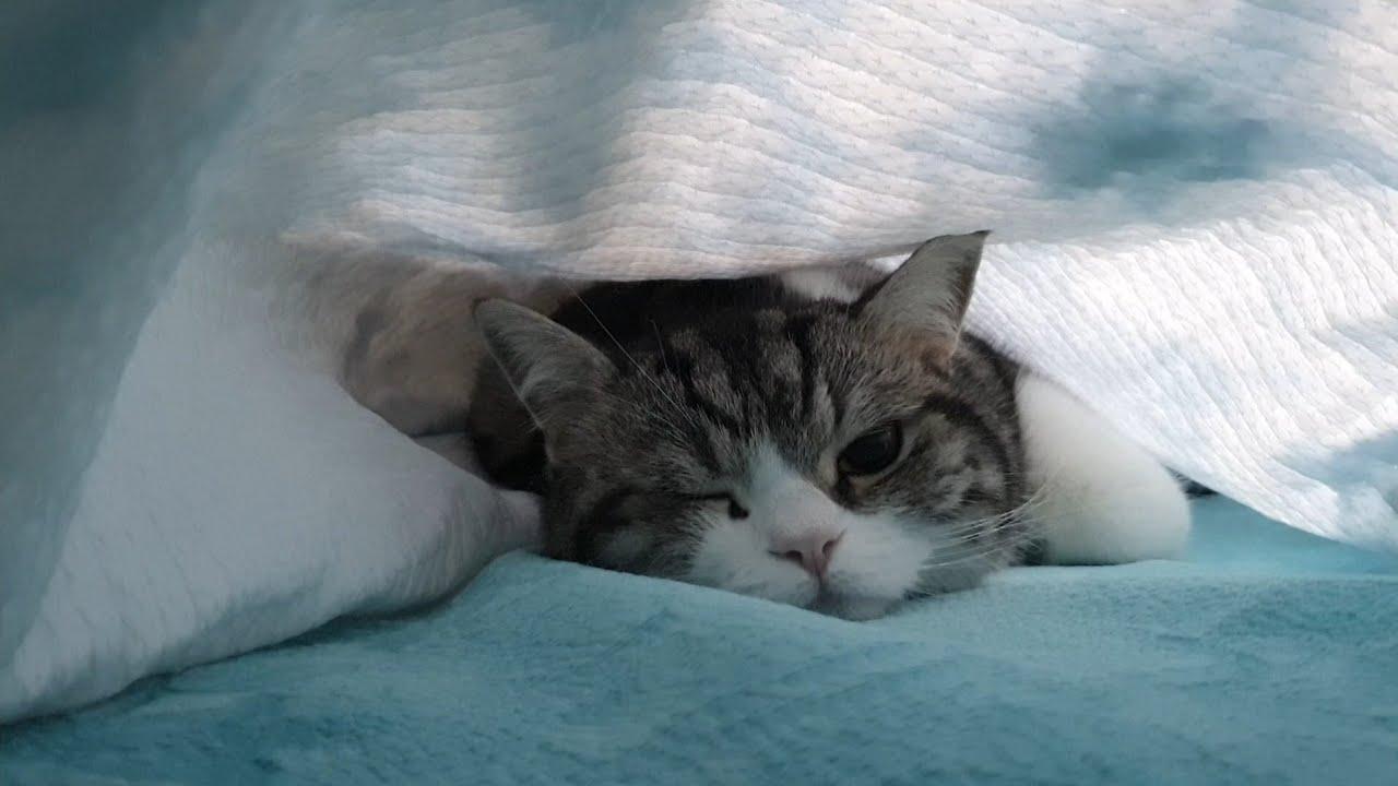 숨바꼭질하다 들키면 윙크하는 고양이