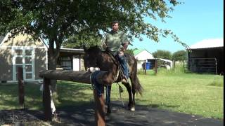 2 of 8 - New Guy With No Horse Exp Saddles Up Mr. T & Rides Him First Time