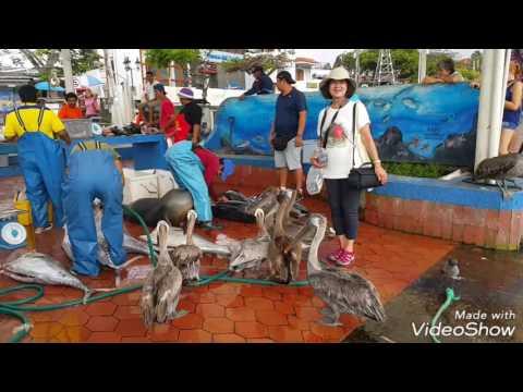 GALAPAGOS 12_Fish Market Puerto Ayora. Santa Cruz Island. Galapagos.
