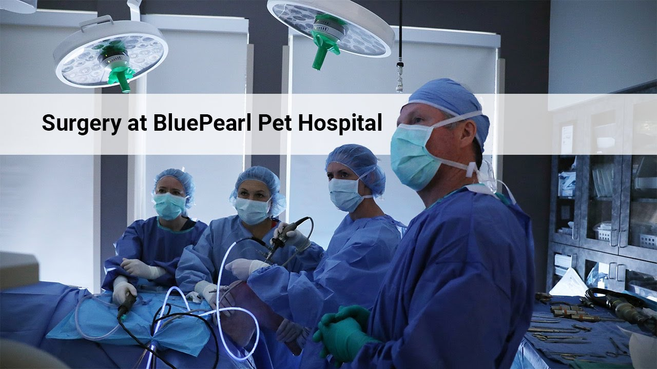 Surgery | BluePearl Specialty + Emergency Pet Hospital