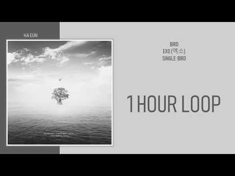 [1 시간 / 1 HOUR LOOP] EXO (엑소) - BIRD