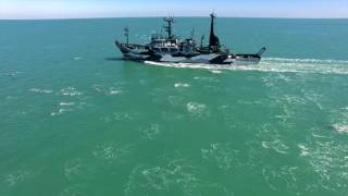 Op. Milagro III: The MV Sam Simon & the Dolphin Megapod