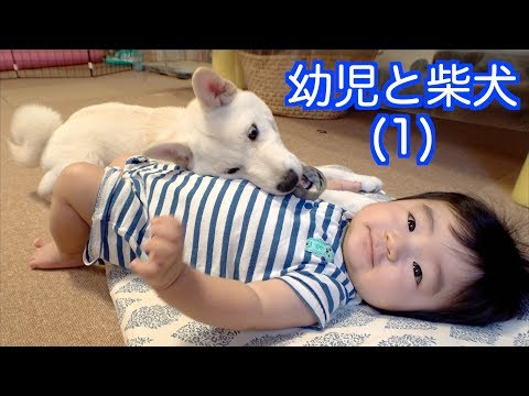 幼児と柴犬(1)