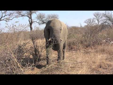 Safari Elefante Video 2 Travel Video