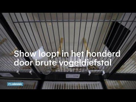 Massa's zeldzame vogels gestolen - RTL NIEUWS