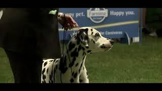 4 SUMMER NIGHT DOG SHOWS SPLIT SUPREME JUNIOR BEST IN SHOW 2017