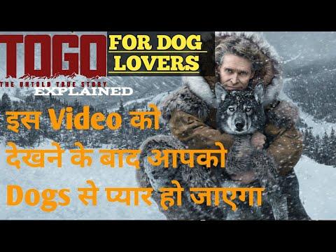TOGO MOVIE EXPLAINED (HINDI) || BEST MOTIVATION MOVIE || A DOG'S TALE || HOLLYWOOD MOVIES EXPLAINER
