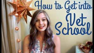 How to Get into Vet School   BellaVet