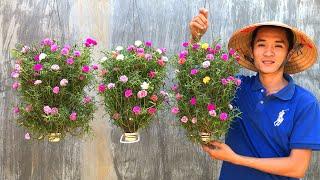 Cultivos De Flores Em Garrafas De Plásticos