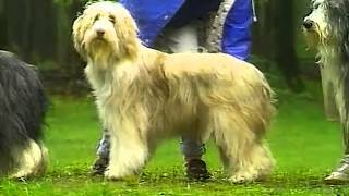 Bearded Collie  AKC Dog Breed Series