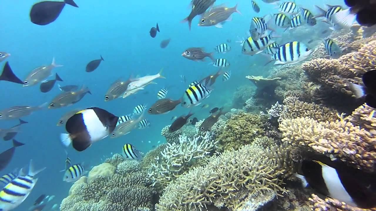 Dream snorkeling the maldives vilamendhoo house reef 2013 for Los mejores hoteles de maldivas