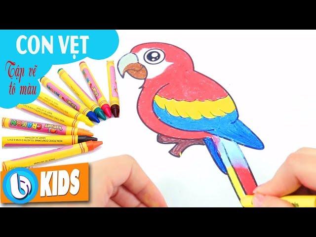 Vẽ Con Vẹt - Vẽ Tranh Tô Màu Cùng Bé | Nhạc Thiếu Nhi Bút Chì Màu