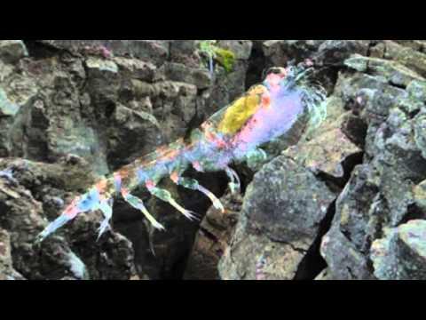 Extremophiles and the Mid Atlantic Ridge