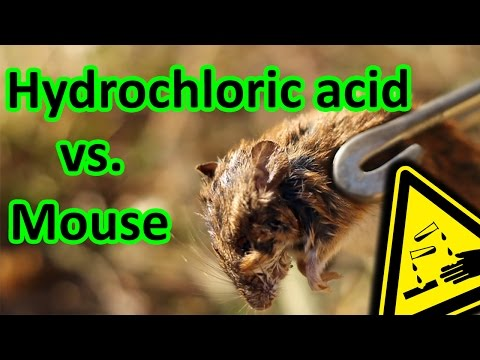 🐭Acid vs. mouse decomposition ☠️  AcidTube-Chemical reactions⚗️