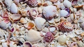 10 Best Little Beach Towns in Florida | Coastal Living