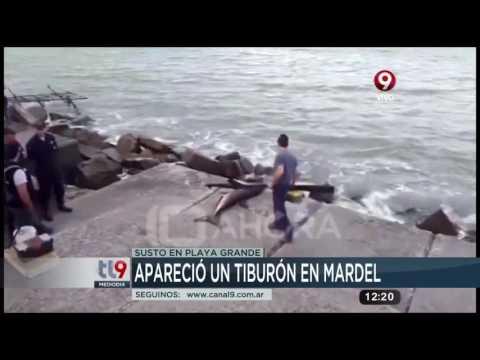¡Apareció un tiburón en Mar del Plata!