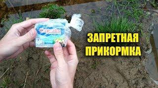 Запретная прикормка в работе Секретное видео Подводная съемка на рыбалке реакция рыбы на сыр
