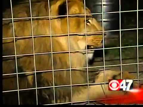 Local Security Measures for Wild Animals KGPE CBS47 Fresno News, Sports Weather for the Central Vall