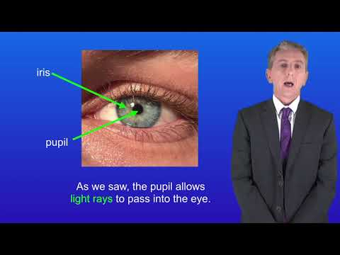 GCSE Science Biology 9-1 Triple The Eye