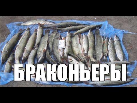 Как Некоторые Рыбаки Косят Щуку в Нерестовый Запрет. Браконьерство...ЦЕНИТЕЛЬ