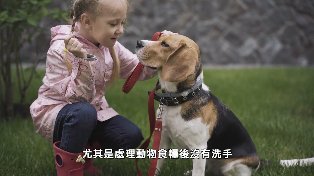 【天下新聞】全國: 因可能受沙門氏菌污染 生產商回收狗==糧