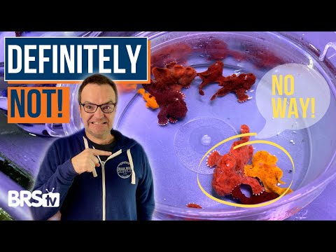 Choose Saltwater Fish Wisely! 9 Beginner Fish Characteristics! Ep: 30