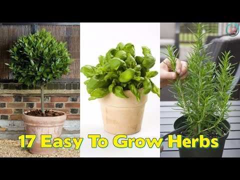 17 Easy To Grow Herbs In Your Home