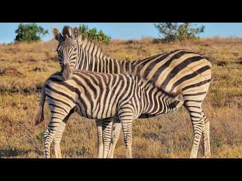 African Hope Hunting Safaris 2019