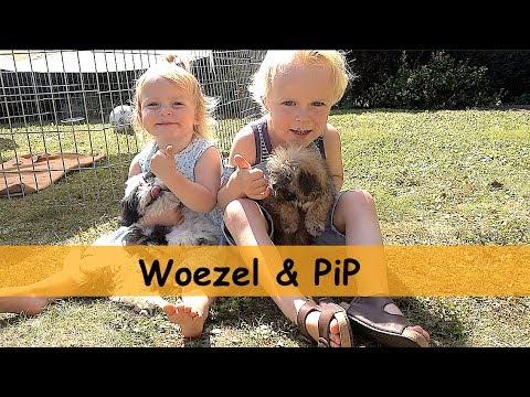 TWEE PUPPY'S OPHALEN!!! ( Woezel & Pip) | Bellinga Family Vlog #675